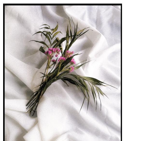 Une fleur pour chaque heure aimée